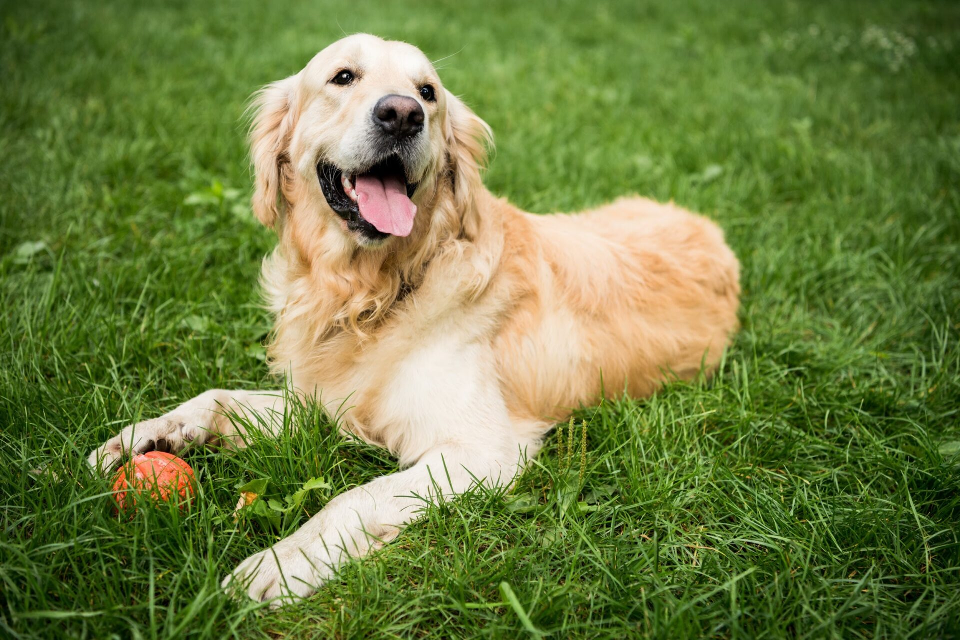The Best Dog Parks in Los Angeles